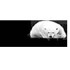 Білий ведмідь logo